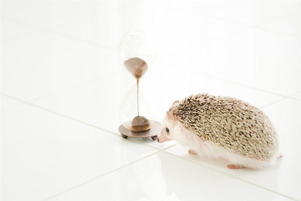 ハリネズミと砂時計